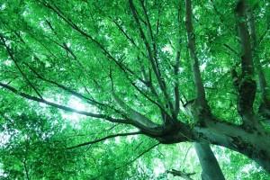 下から見た木