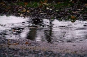 High Angle View Of Raindrops On Puddle